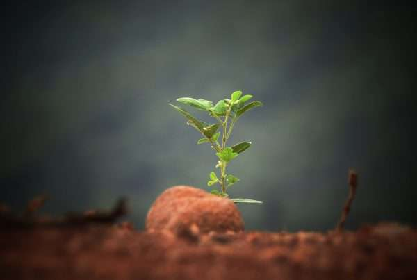 Customized Data Entry Services Solution Supporting the Building of Personalized Seeds for a Biotech Company